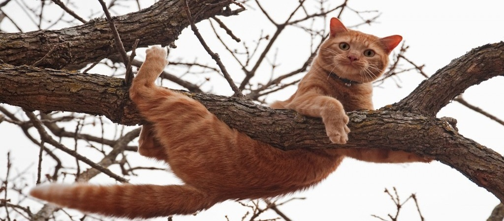bigstock-Cat-in-distress-orange-tabby-25962974-1024x684